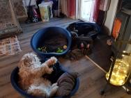 Äh vad tråkiga de är, jag lägger mig på golvet!!!